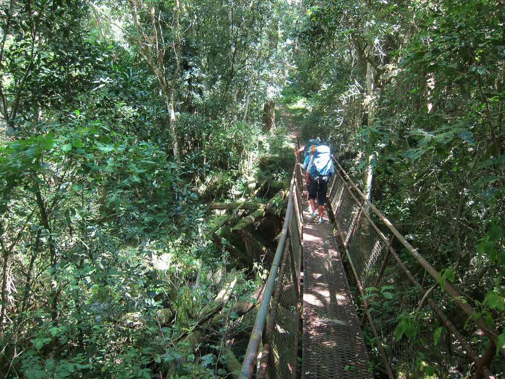 amatola-day1-pirieforest-bridge