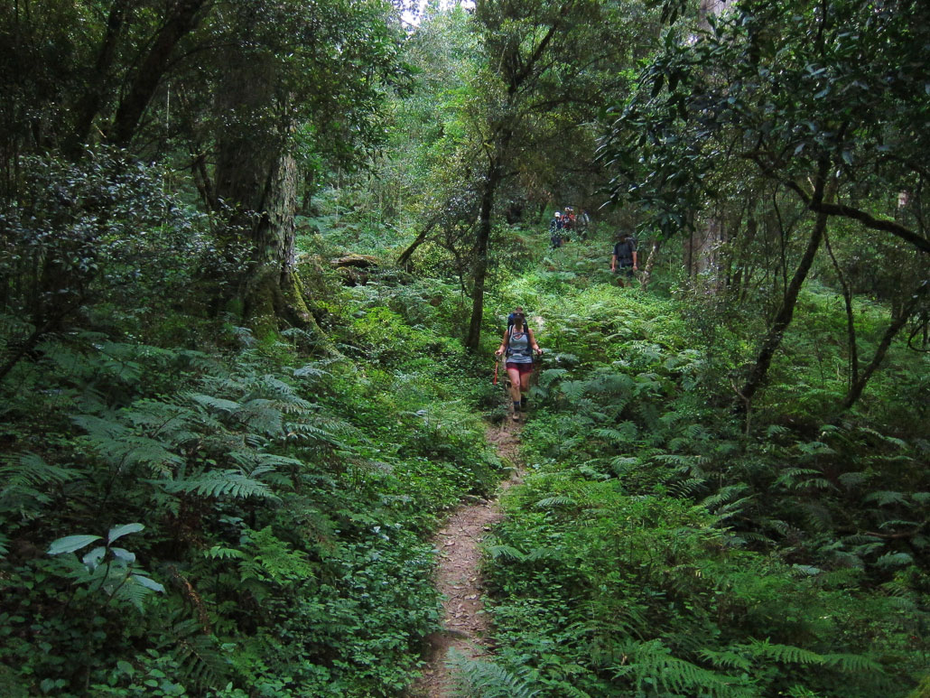 amatola-day2-forest-hiker-path