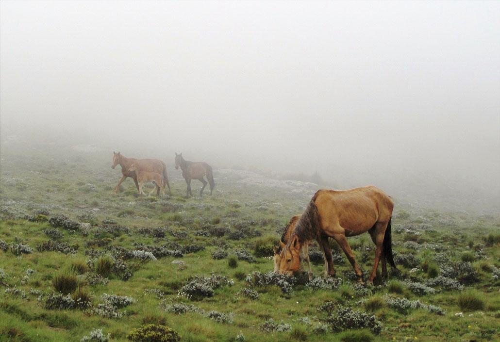 drakensberg-summer-fog