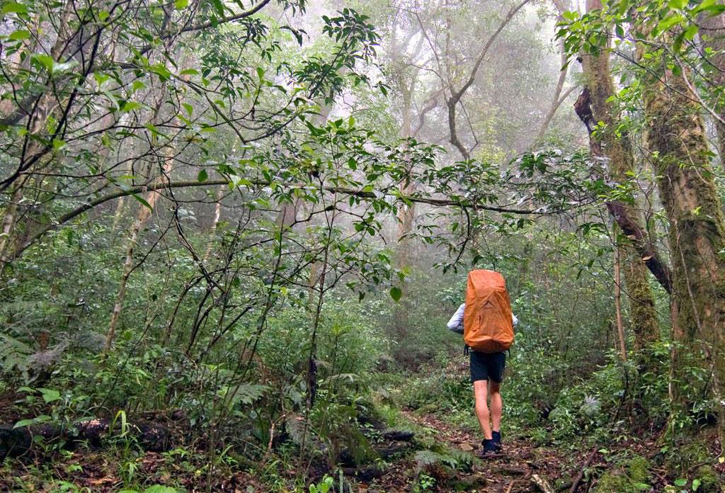 fanie-botha-forest-hiker-kwenda-travel