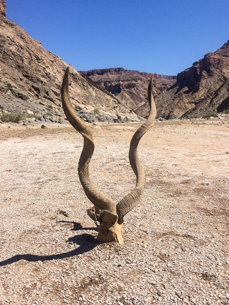 fish-river-canyon-skull-horns