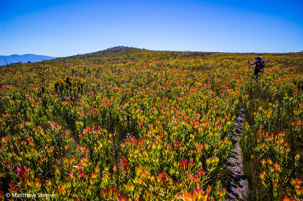 highlands-trail-fynbos-kingdom