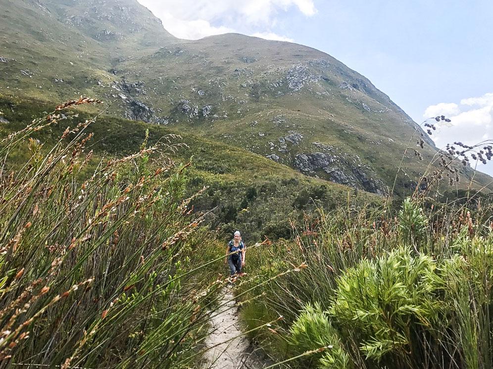 kogelberg-trail-restios