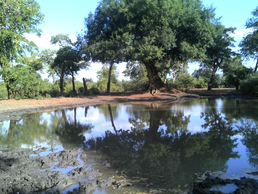 kruger-trail-waterhole
