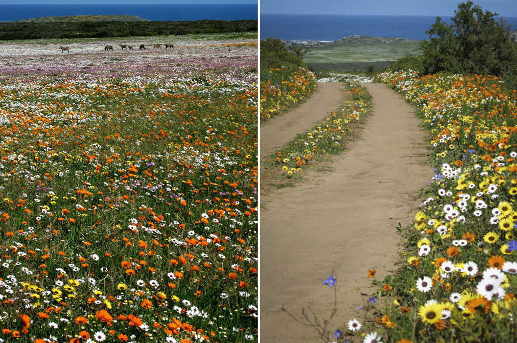 steenbok-flower-trail-flowery-field-jeep-track2