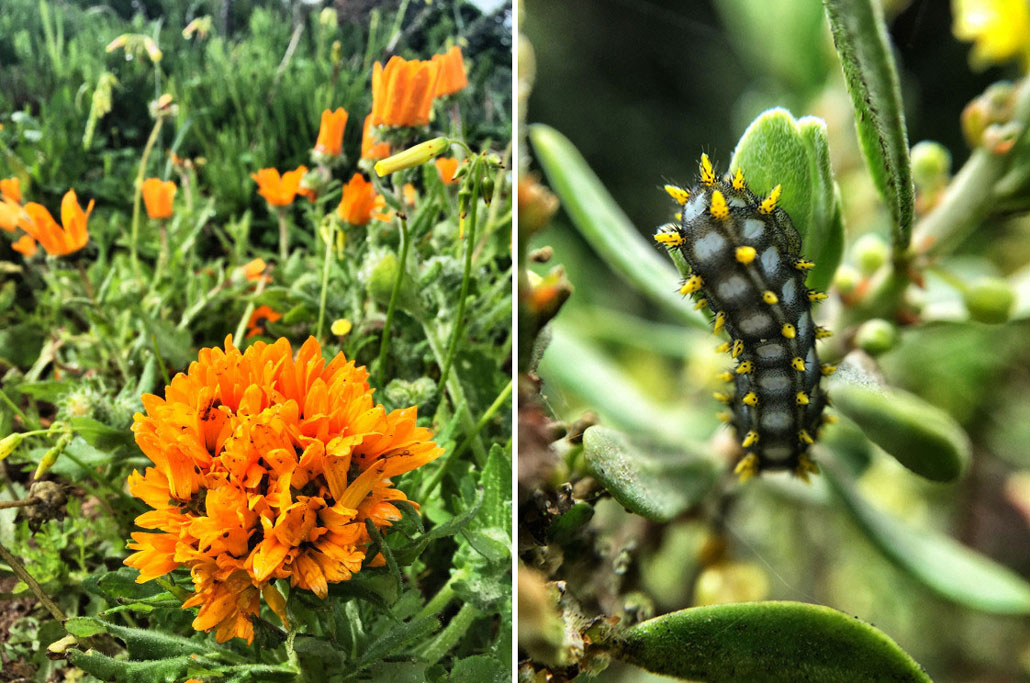 steenbok-flower-trail-orange-flower-worm2
