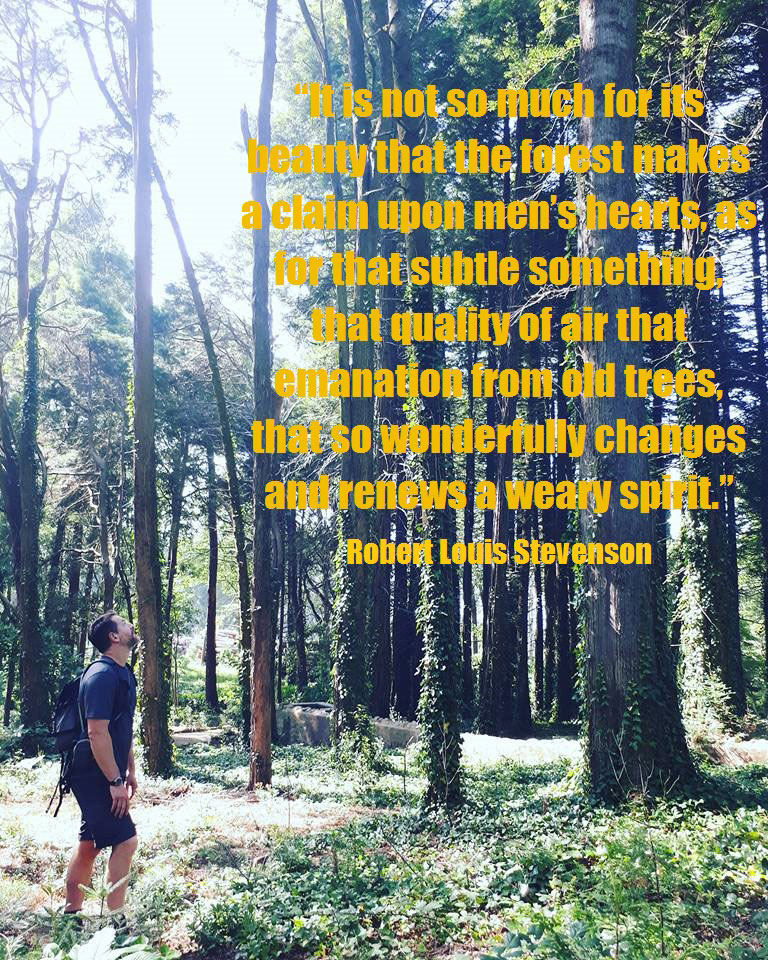 wilderness-quotes-trees