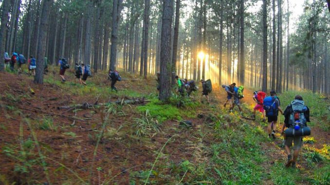 fanie-botha-sunrays-through-trees-kondensmelk-productions