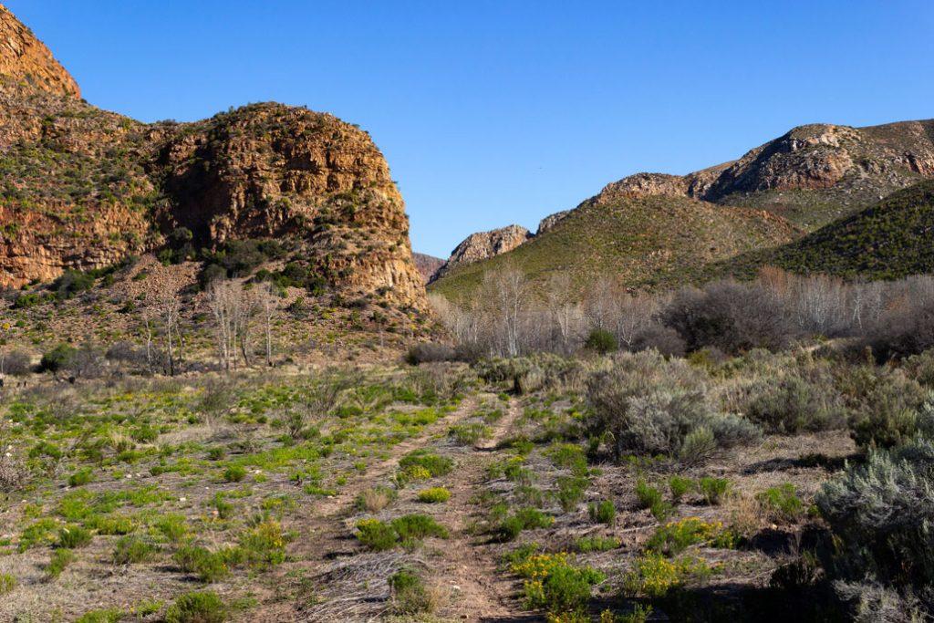 leopard-trail-184