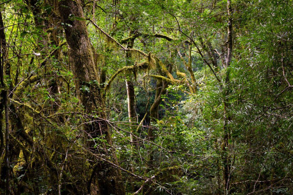 outeniqua-trail-dense-forest-old-mans-beard