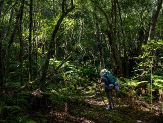 outeniqua-trail-hiker-admiring-forest