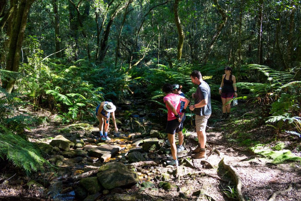 outeniqua-trail-hikers-ferns-river