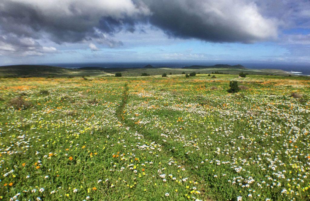 steenbok-flower-trail-flowery-field