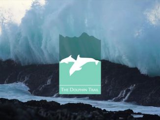 video-dolphin-trail